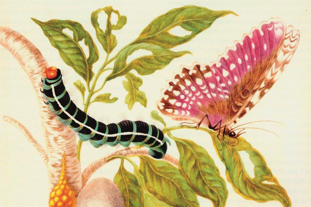 El arte y la ciencia de Maria Sibylla Merian
