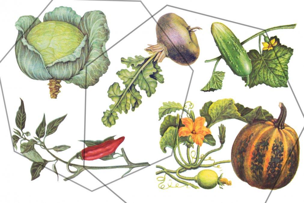 La curiosa historia de las vitaminas - Segunda Parte