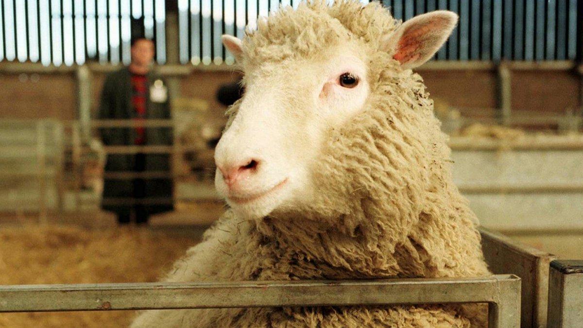 ¿Por qué Dolly es tan famosa si no fue el primer animal clonado?
