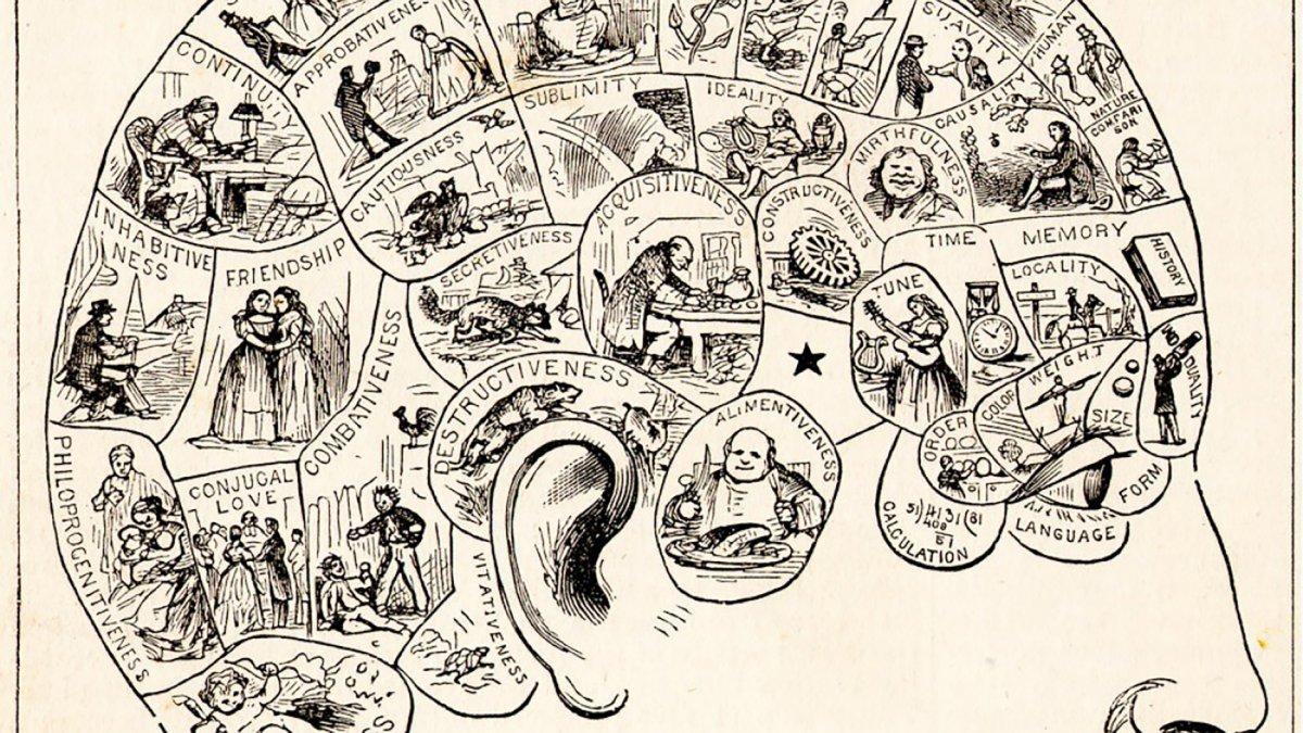 Frenología: midiendo el cráneo para estudiar la mente