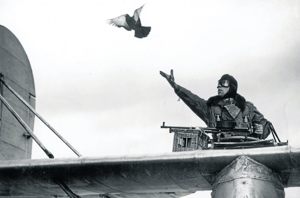 Mensajes de palomas