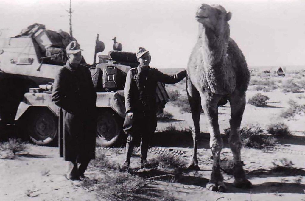 El Afrika Korps y las heces de camello