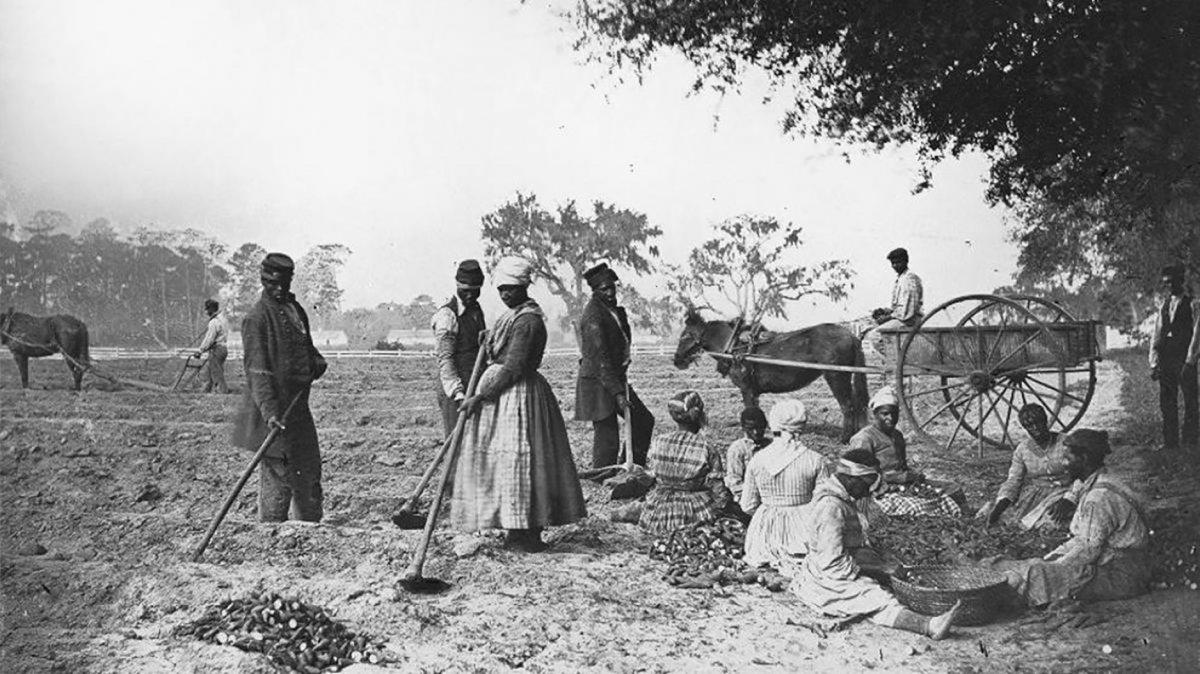 Plantación de boniatos de James Hopkinson en 1862/1862