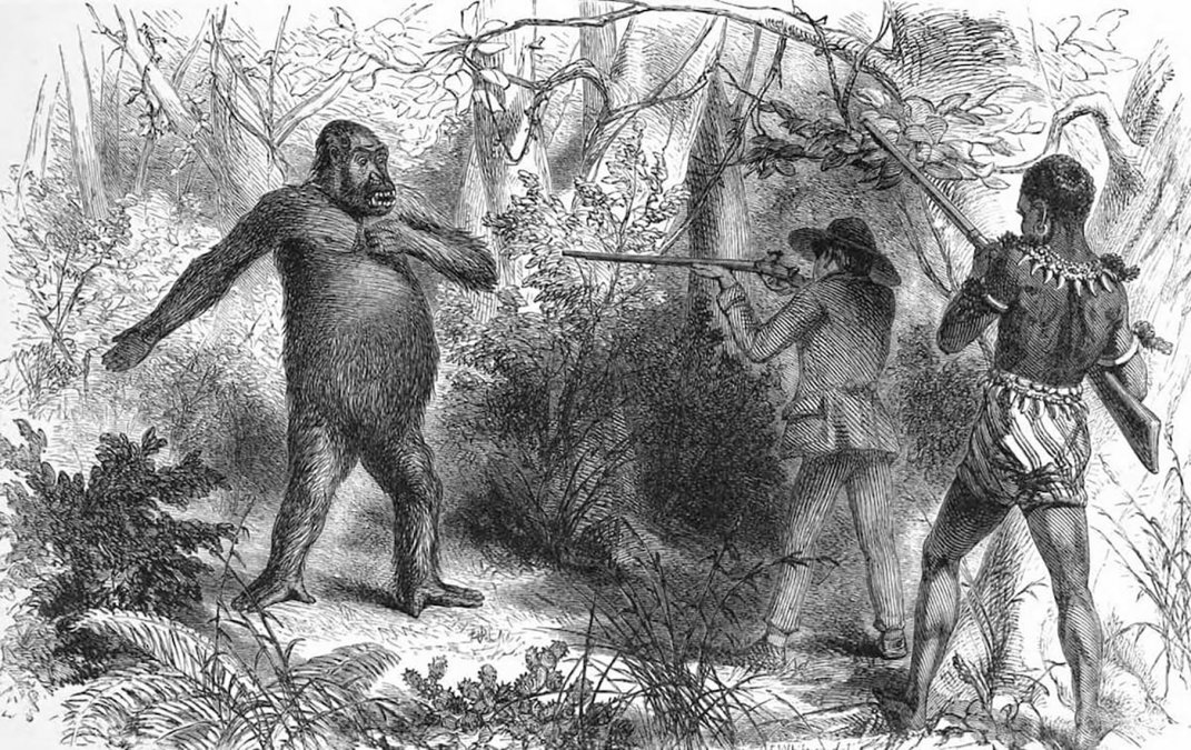 Primer encuentro de Chaillu con un gorila