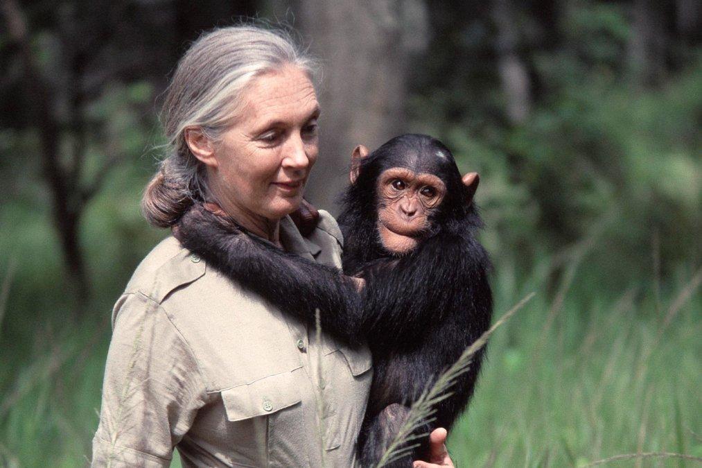 Jane Goodall: Gorilas en la niebla