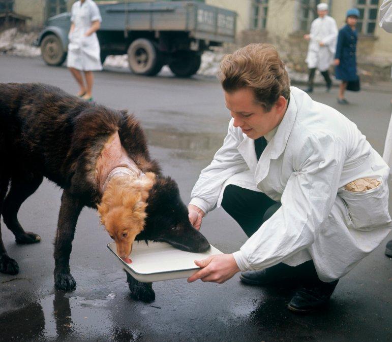 El Perro de dos cabezas: La historia de Vladímir Démijov y los transplantes